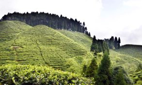 Mirk Tea Garden