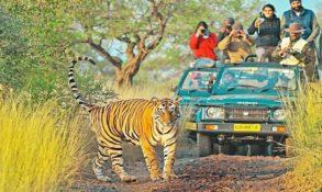 Ranthmbore National Park